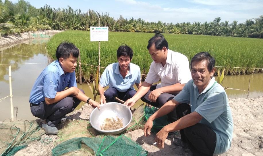 Nuôi tôm càng xanh - lúa thích ứng với biến đổi khí hậu và một số giải pháp phát triển trong tương lai
