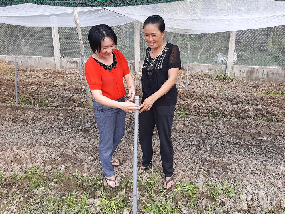 Chị Trần Thị Le tiên phong trồng rau sạch an toàn  ở Bình Thạnh