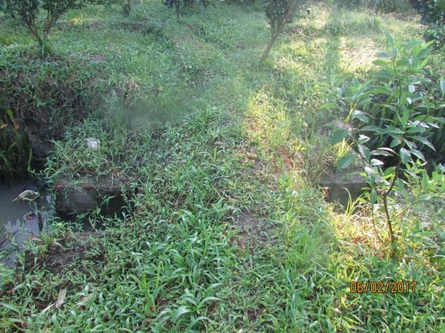 Mô hình đắp đập trữ nước ngọt đối phó hạn mặn trong vườn bưởi da xanh