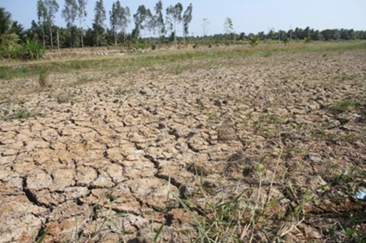 Giải pháp ứng phó trước tình hình hạn hán và xâm nhập mặn trong sản xuất trồng trọt