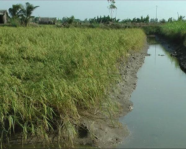 Thích ứng với hạn, xâm nhập mặn ổn định sản xuất nông nghiệp và đời sống cho người dân
