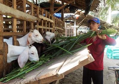 Nông dân thu lãi hơn 100 triệu đồng mỗi năm nhờ mô hình nuôi dê
