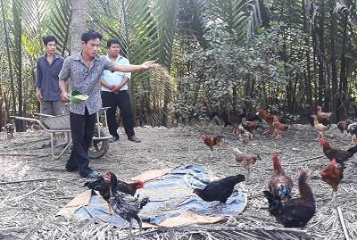 Thanh niên xã Thuận Điền hợp tác chăn nuôi gà thả vườn