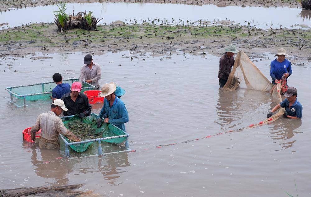 Giai đoạn 2021-2025, huyện Thạnh Phú phấn đấu thành lập mới 400 doanh nghiệp