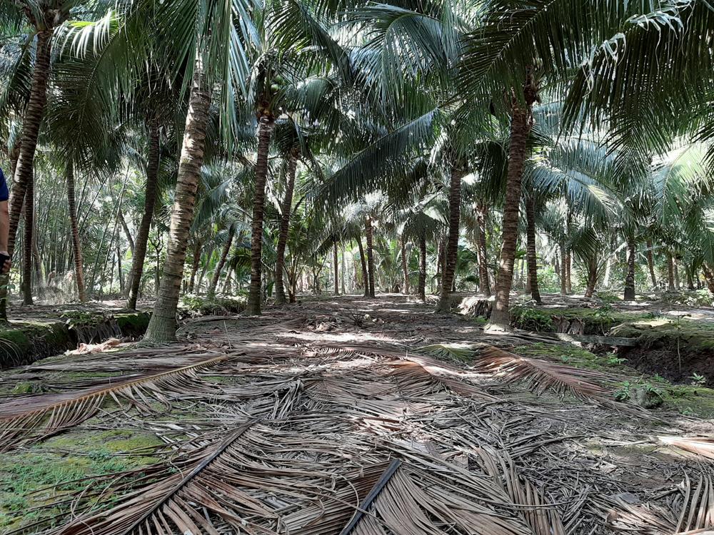 Một số kinh nghiệm nhằm hạn chế thiệt hại cho cây trồng trong điều kiện hạn mặn