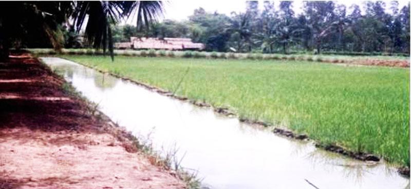 Mô hình nuôi tôm càng xanh toàn đực xen lúa và luân canh tôm sú sinh thái tại tỉnh Bến Tre