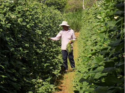Mô hình trồng 2 vụ màu, 1 vụ lúa đem lại hiệu quả kinh tế cao cho nông dân Tân Thanh