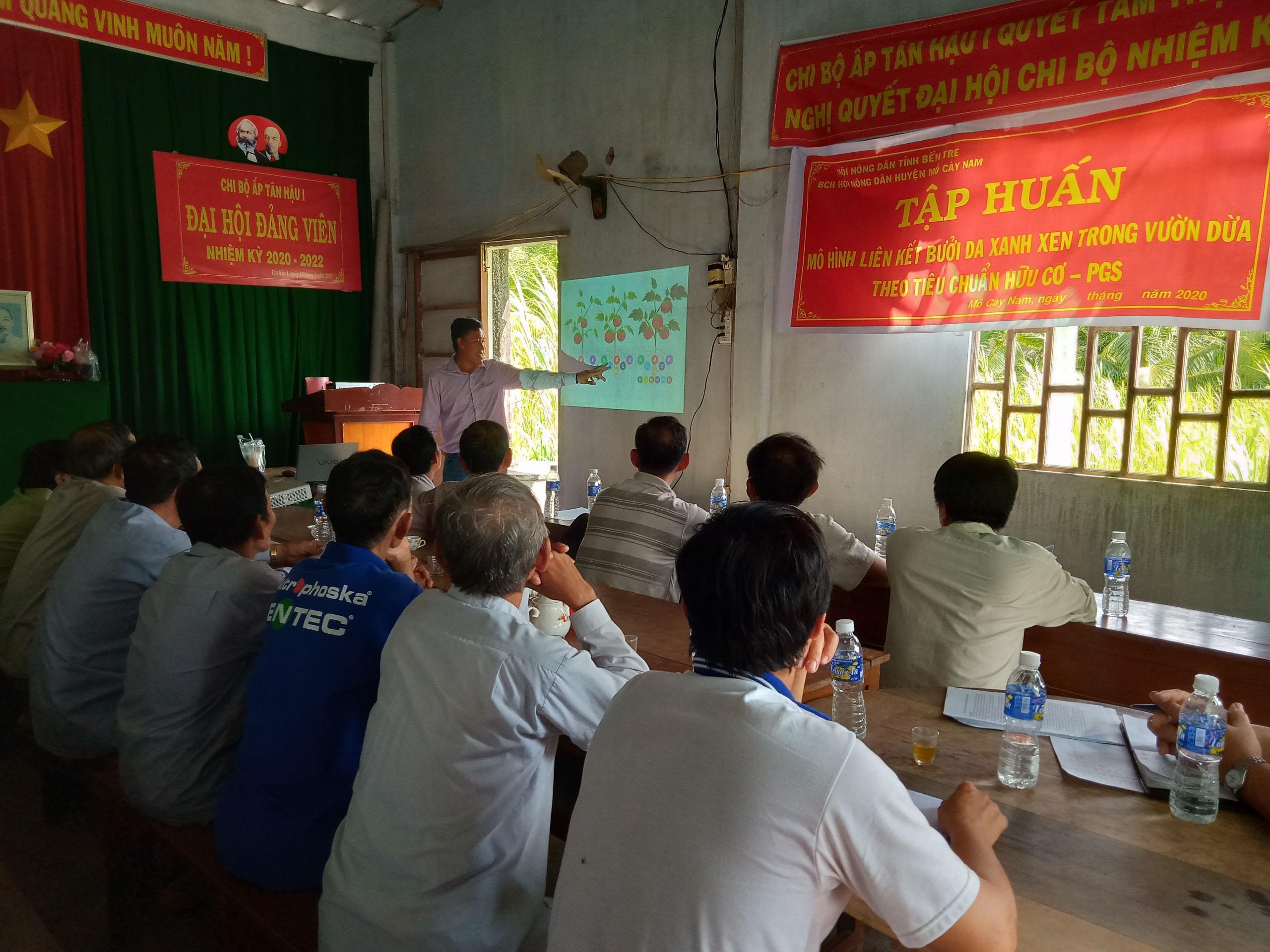 Xã Tân Trung, huyện Mỏ Cày Nam chuyển giao quy trình kỹ thuật chăm sóc cây bưởi da xanh xen trong vườn dừa theo tiêu chuẩn hữu cơ – PGS