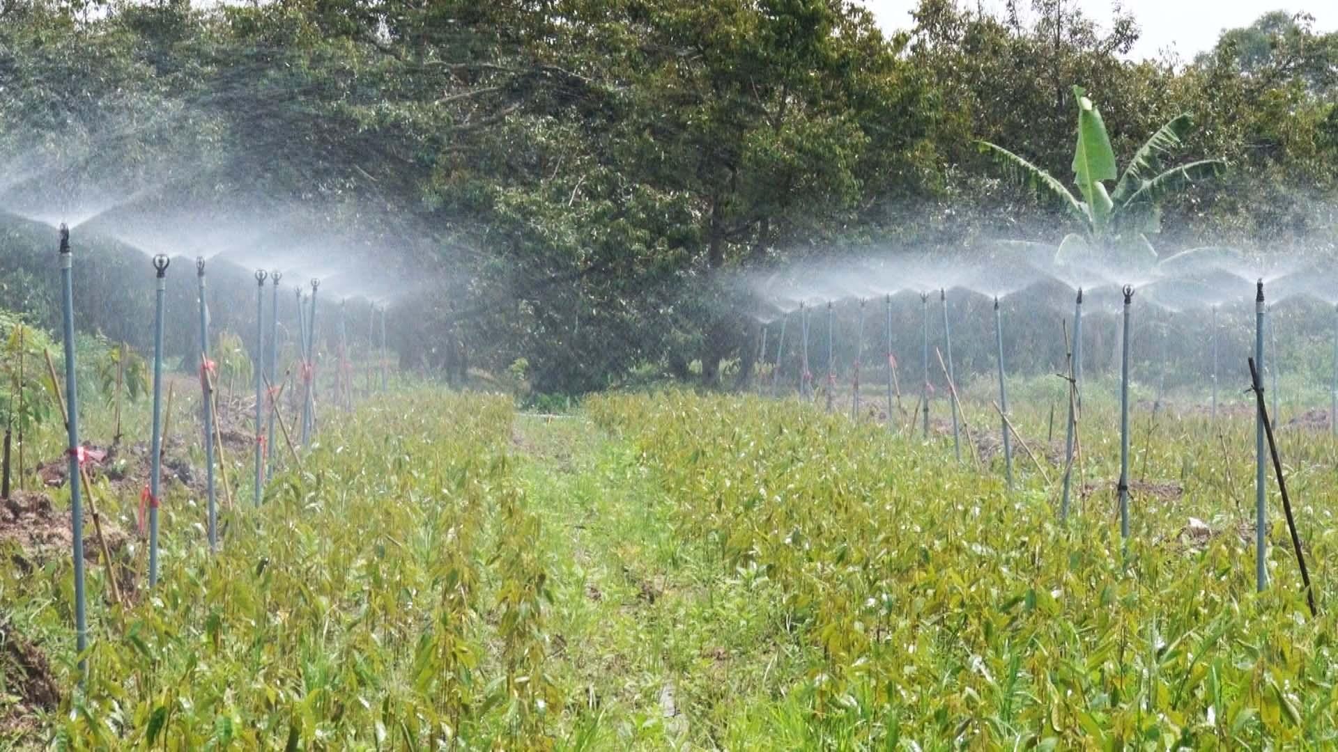 Nông dân Chợ Lách áp dụng rộng rãi khoa học kỹ thuật vào trong sản xuất