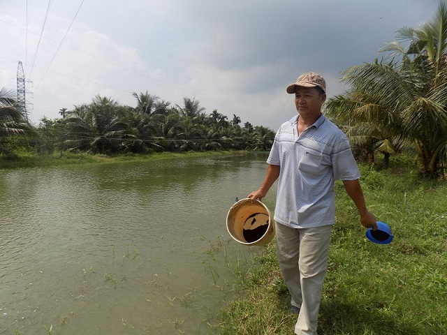 Hiệu quả từ mô hình ươm cá nước ngọt trên đất ruộng