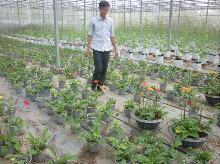 Ứng dụng công nghệ nuôi cấy mô tế bào thực vật trong nhân giống sản xuất giống hoa kiểng ở Bến Tre