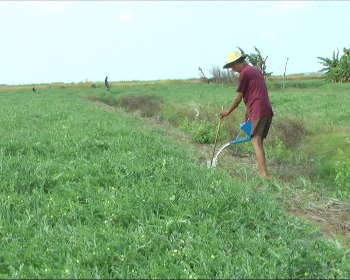 Bình Đại: Tăng cường chuyển giao khoa học kỹ thuật cho hội viên nông dân