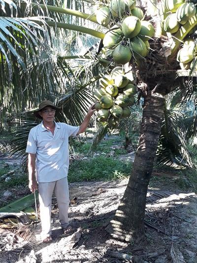 Giồng Trôm: Gương nông dân sản xuất giỏi Nguyễn Văn Dũng