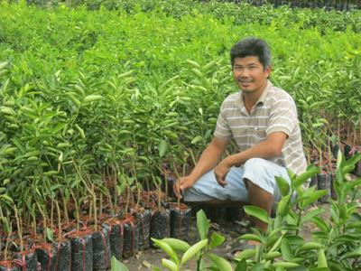 Anh Mai Hữu Truyền với nghề sản xuất cây giống - cây chanh không hạt