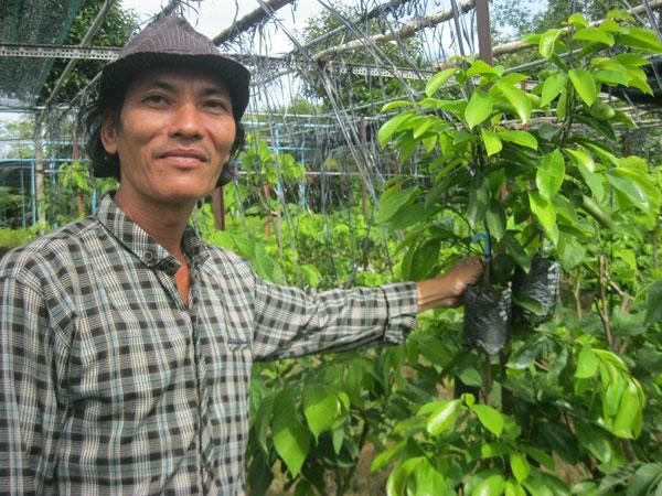 Anh Lê Văn Thảo trở thành tỷ phú nhờ sản xuất cây giống mãng cầu