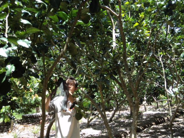 Hiệu quả từ tổ hợp tác trồng bưởi ấp Tân Long II