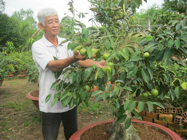 Nông dân Nguyễn Văn Phước sau thành công từ kiểng mai vàng  đi tìm xu hướng mới từ kiểng cây ăn trái