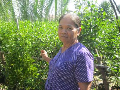 Kinh nghiệm làm kiểng tắc cho thu nhập khá của bà Nguyễn Thị Ngọc