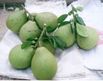 Công nghệ bảo quản bưởi bằng chitosan