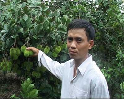 Thu nhập cao từ vườn chôm chôm Thái Lan