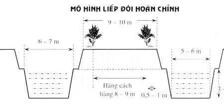 Kỹ thuật trồng Dừa