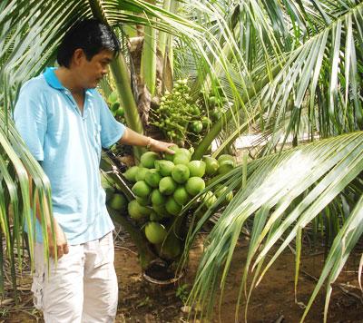 Lê Văn Cường-người bảo tồn nguồn gen giống dừa xiêm xanh