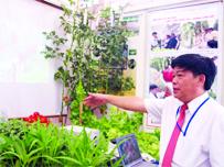 Trồng rau an toàn không dùng đất tại nhà