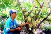 Việt Nam - Hà Lan ký ghi nhớ phát triển ca cao bền vững