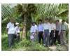 Nghiên cứu trồng thử nghiệm giống Dừa Sáp trên đồng đất Mỏ Cày
