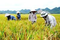 Vinh danh hai nông dân sản xuất lúa sáng tạo