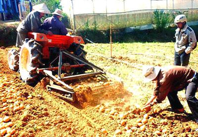 Nông dân chế tạo máy đào khoai tây