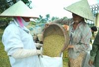 Xây dựng thương hiệu gạo Đồng bằng sông Cửu Long