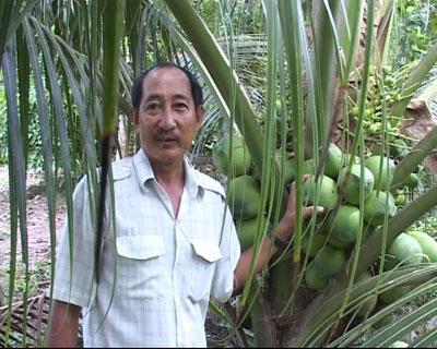 Hiệu quả mô hình trồng dừa xiêm lục