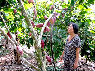 Festival góp phần xác định vị trí và chỗ đứng bền vững cho cây dừa